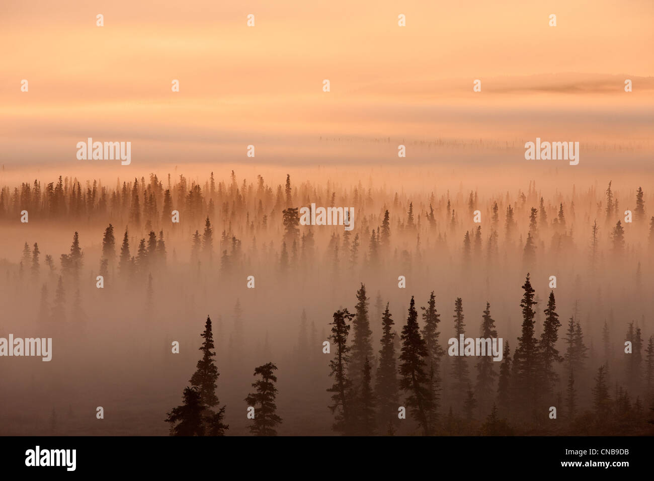 Amanecer sobre un bosque neblinoso, Parque Nacional Katmai y preservar, en el suroeste de Alaska, Otoño Imagen De Stock