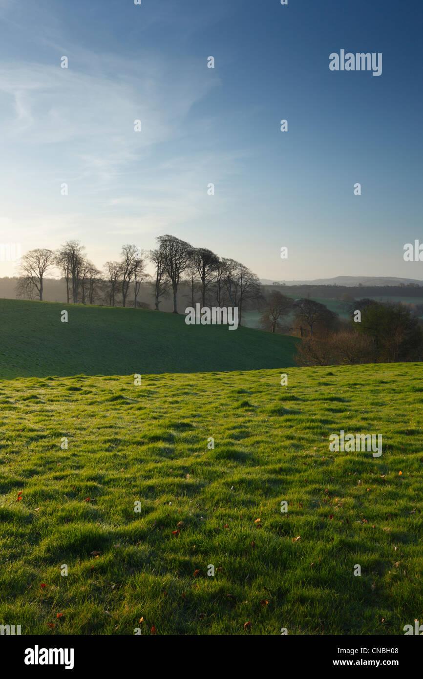 Cricket St Thomas Estate en primavera. Somerset. Inglaterra. En el Reino Unido. Imagen De Stock