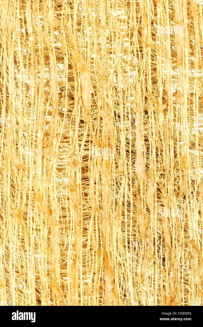 Cerca de fibras de madera de corteza de árbol Antecedentes Imagen De Stock