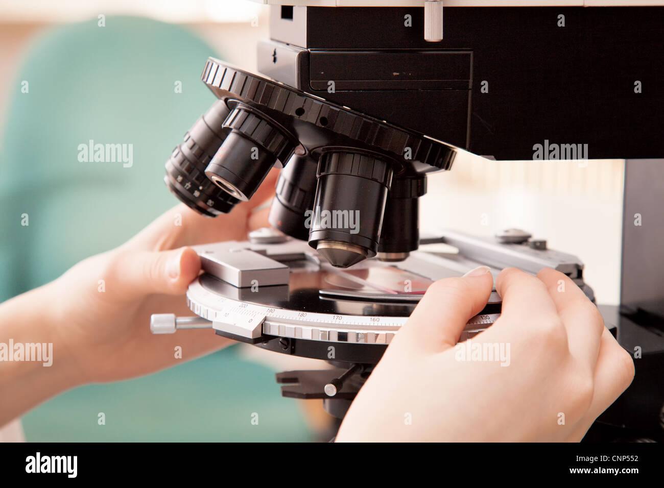 Las manos de los científicos establecieron la placa del objeto en el microscopio. Imagen De Stock