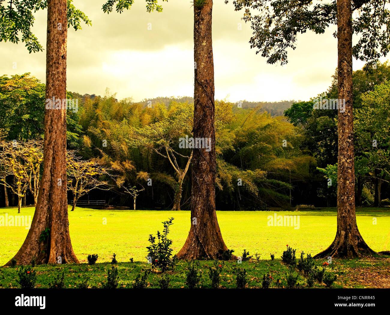 Jardín Botánico Lancetilla cerca de Tela, Honduras. Imagen De Stock