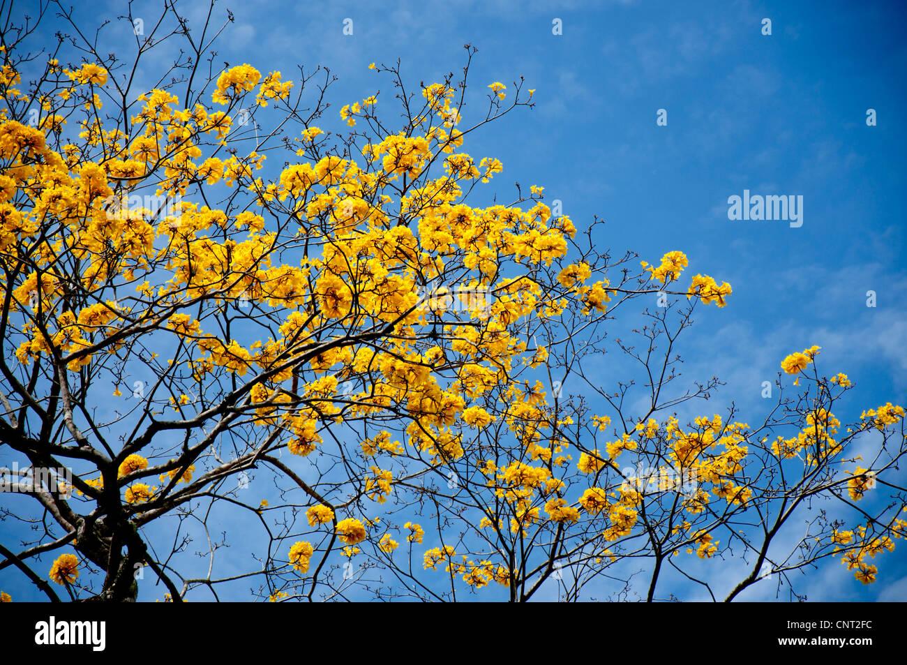 Arbol Con Flores Amarillas Pequenas