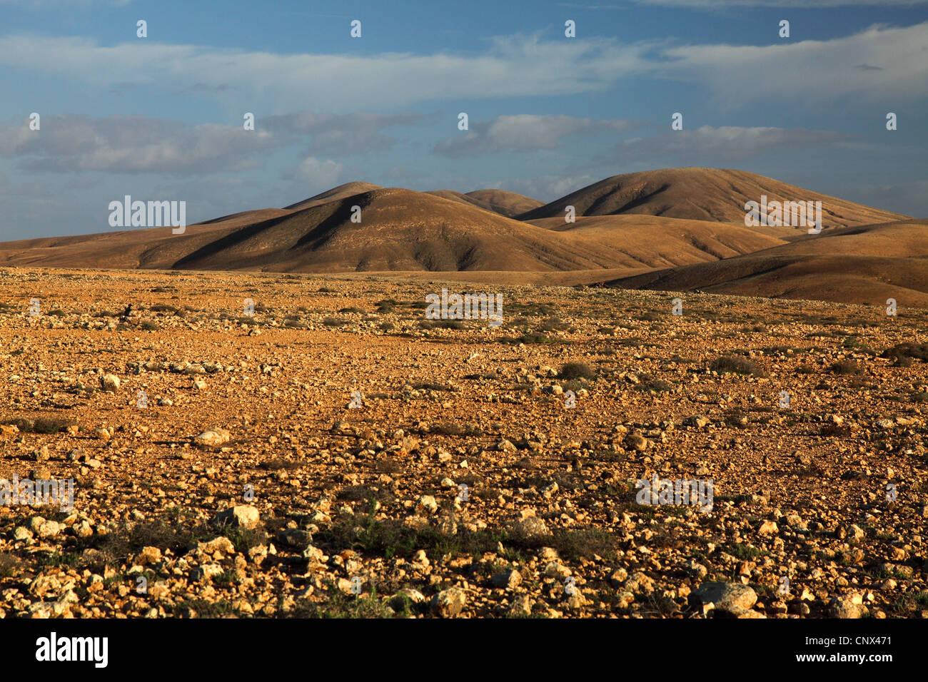 Un desierto rocoso con plantas suculentas, Islas Canarias, Fuerteventura, Tindaya Imagen De Stock