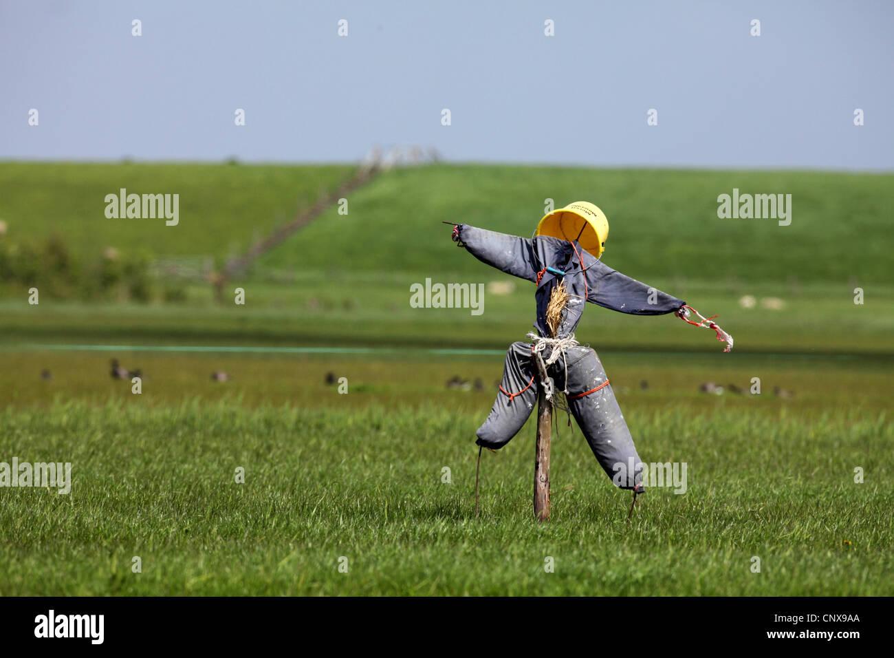 Espantapájaros en un campo, Holanda, Texel Foto de stock
