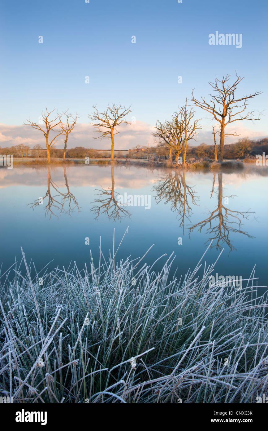 Los árboles se refleja en un espejo aún lago de pesca en una helada mañana, Morchard Road, Devon, Imagen De Stock