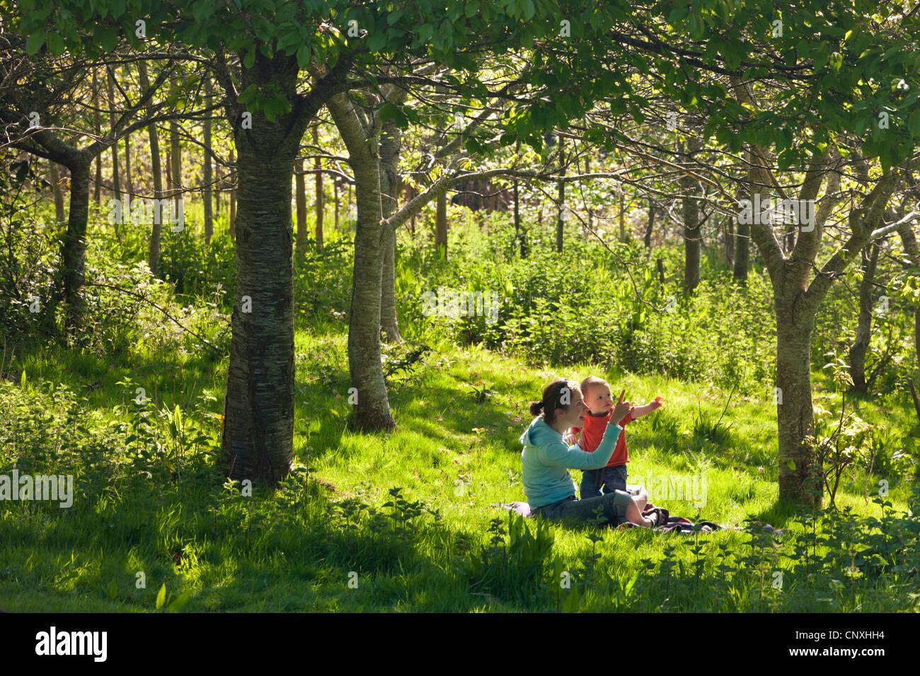 La joven madre e inquisitiva de un año un hijo pequeño en un bosque, madera Cutteridge, Devon, Inglaterra. La primavera Foto de stock
