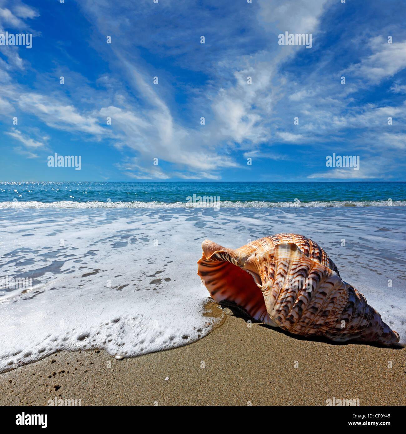 Playa con caracola bajo un cielo azul Imagen De Stock