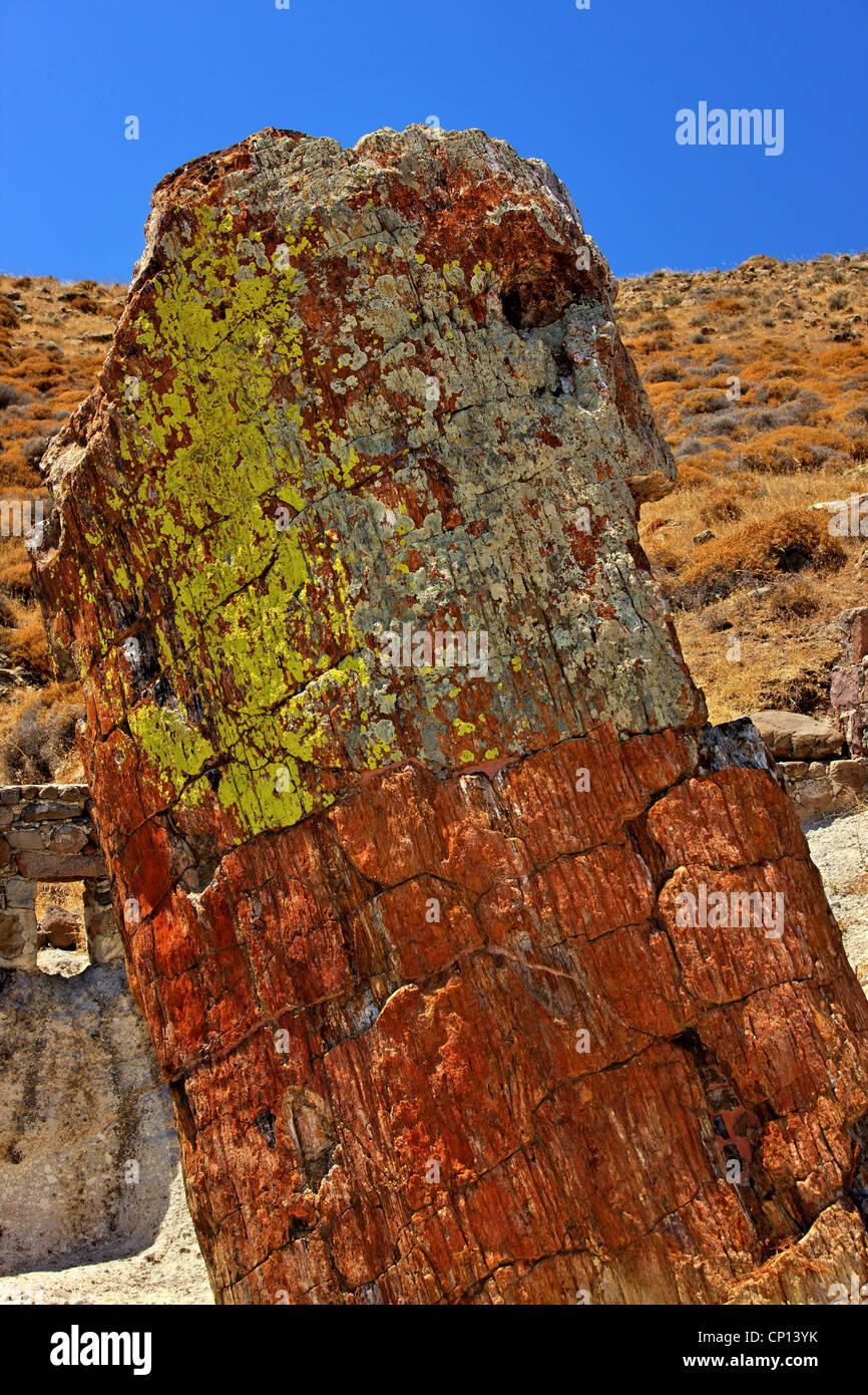 Un árbol petrificado en el bosque petrificado cerca de Sigri village, Lesvos Island, Grecia. Imagen De Stock