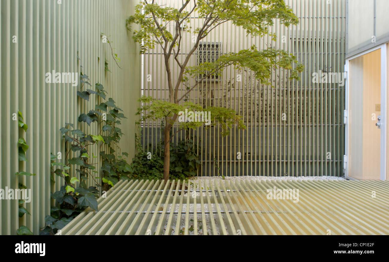 Árbol que crece en el jardín minimalista Foto de stock