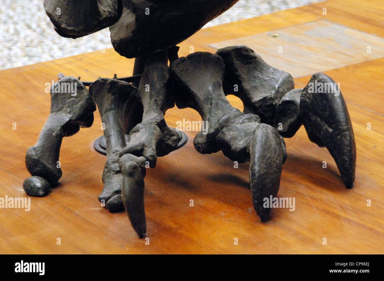 El Diplodocus (Diplodocus carnegii). Pierna. Detalle. Jurásico Superior. 150 millones de años. Foto de stock