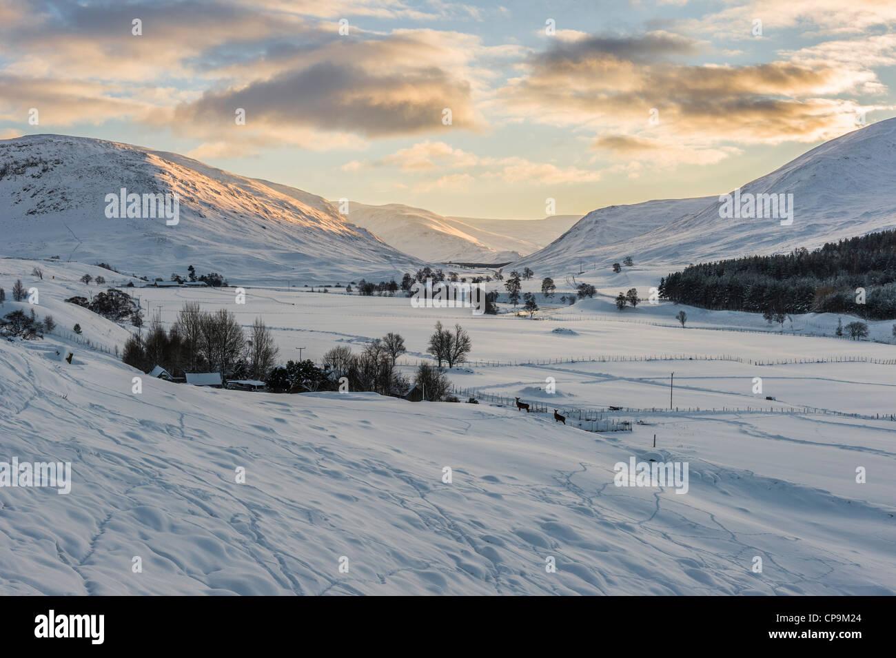 Atardecer en Glen Clunie en invierno, Cairngorms, Scotland, Reino Unido Foto de stock