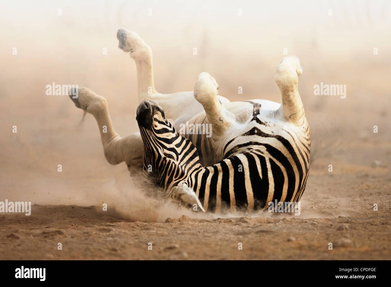 Laminación de cebra en la polvorienta arena blanca; Etosha Foto de stock