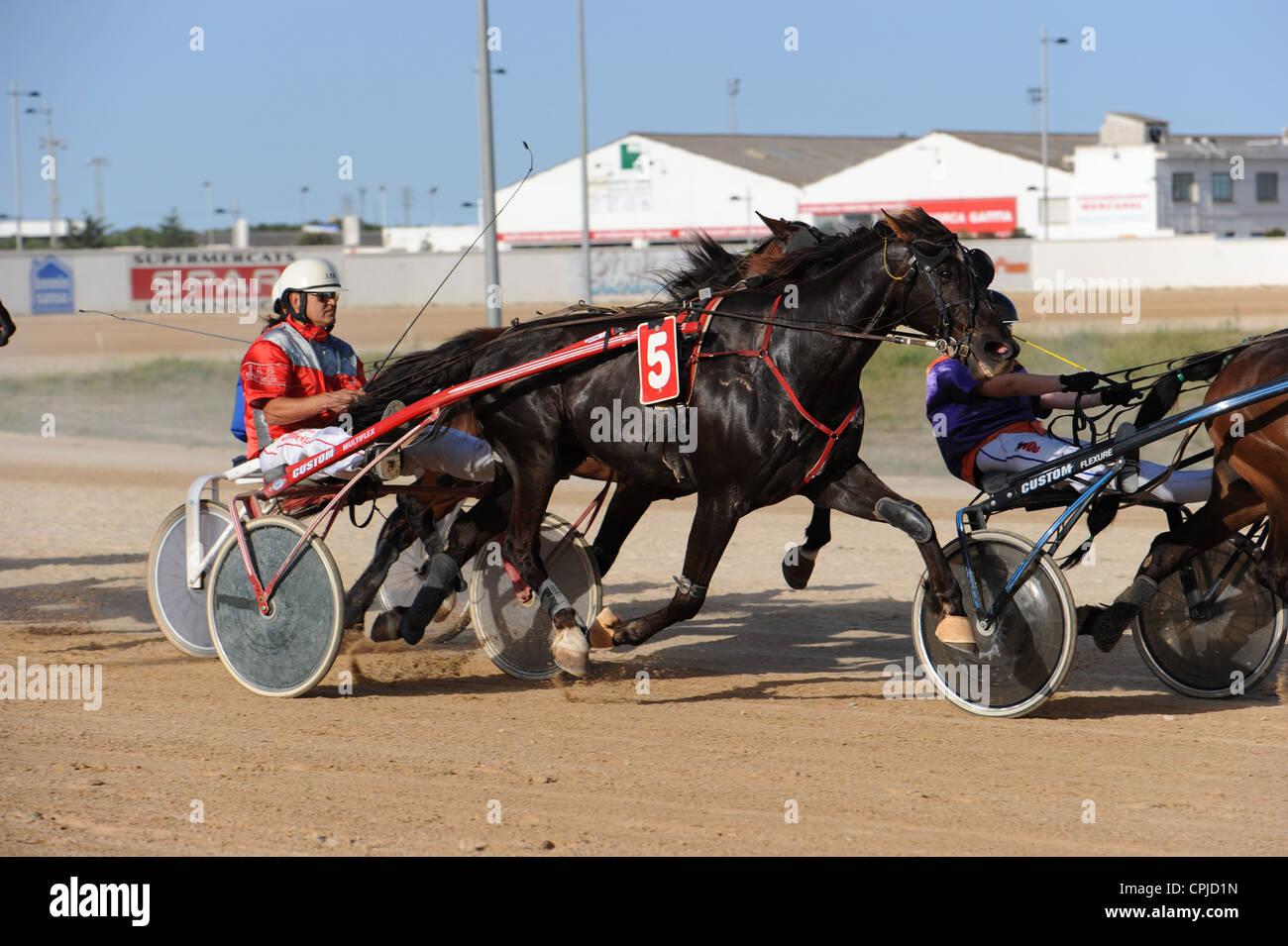Acción de disparo caballo carreras de caballos, Menorca, España Imagen De Stock