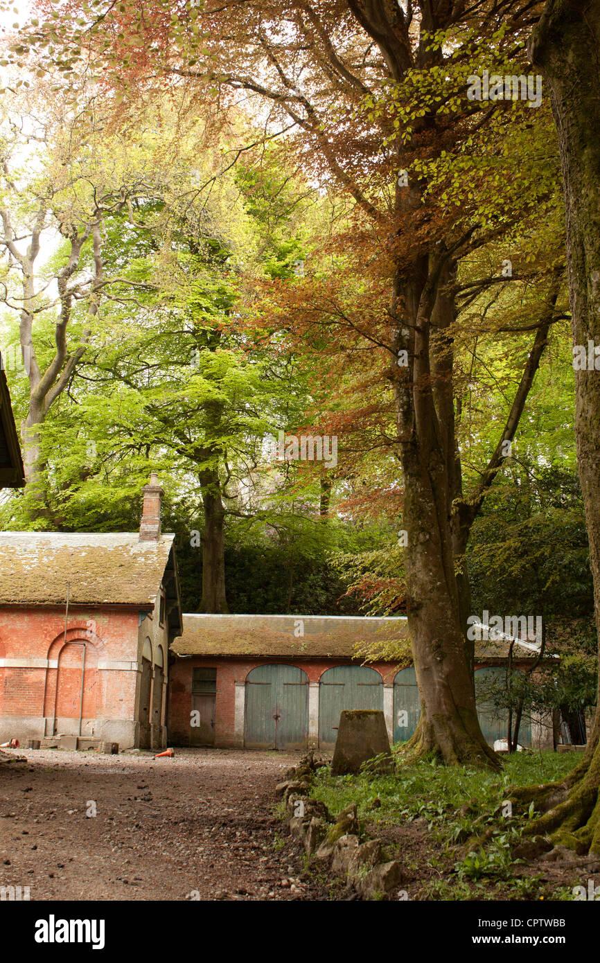 Antiguo pajar y árboles garajes woodland summer light Foto de stock