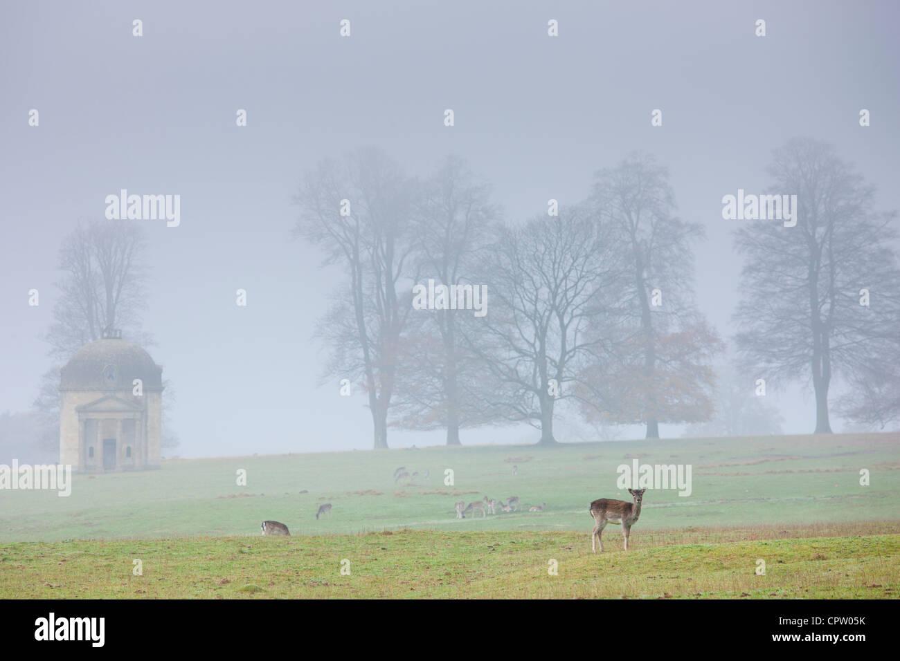 Venado en el Misty escena en Barrington parque cerca de Burford en Cotswolds, Oxfordshire, REINO UNIDO Foto de stock