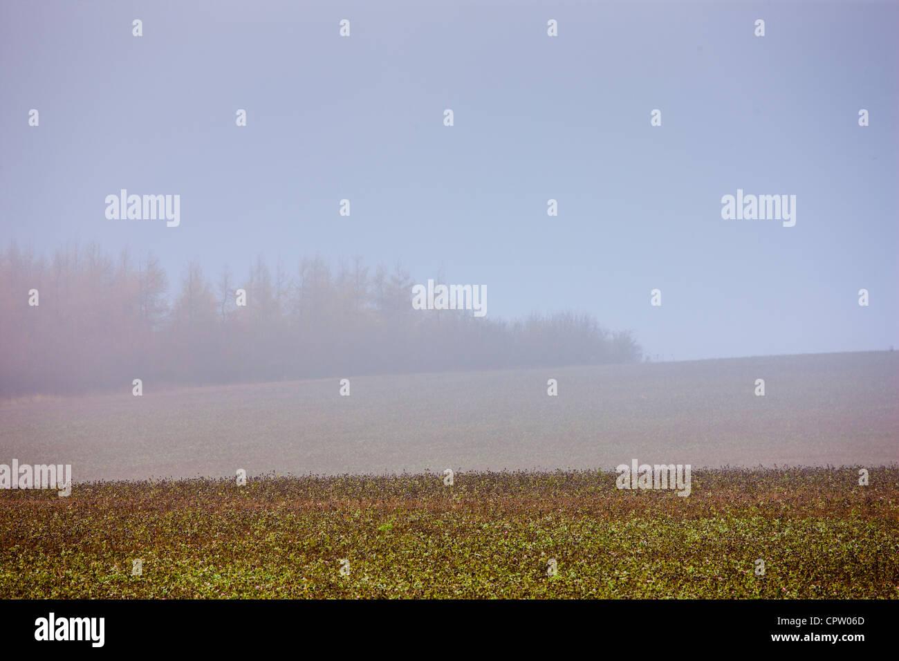 Misty escena en Barrington cerca de Burford en Cotswolds, Oxfordshire, REINO UNIDO Foto de stock