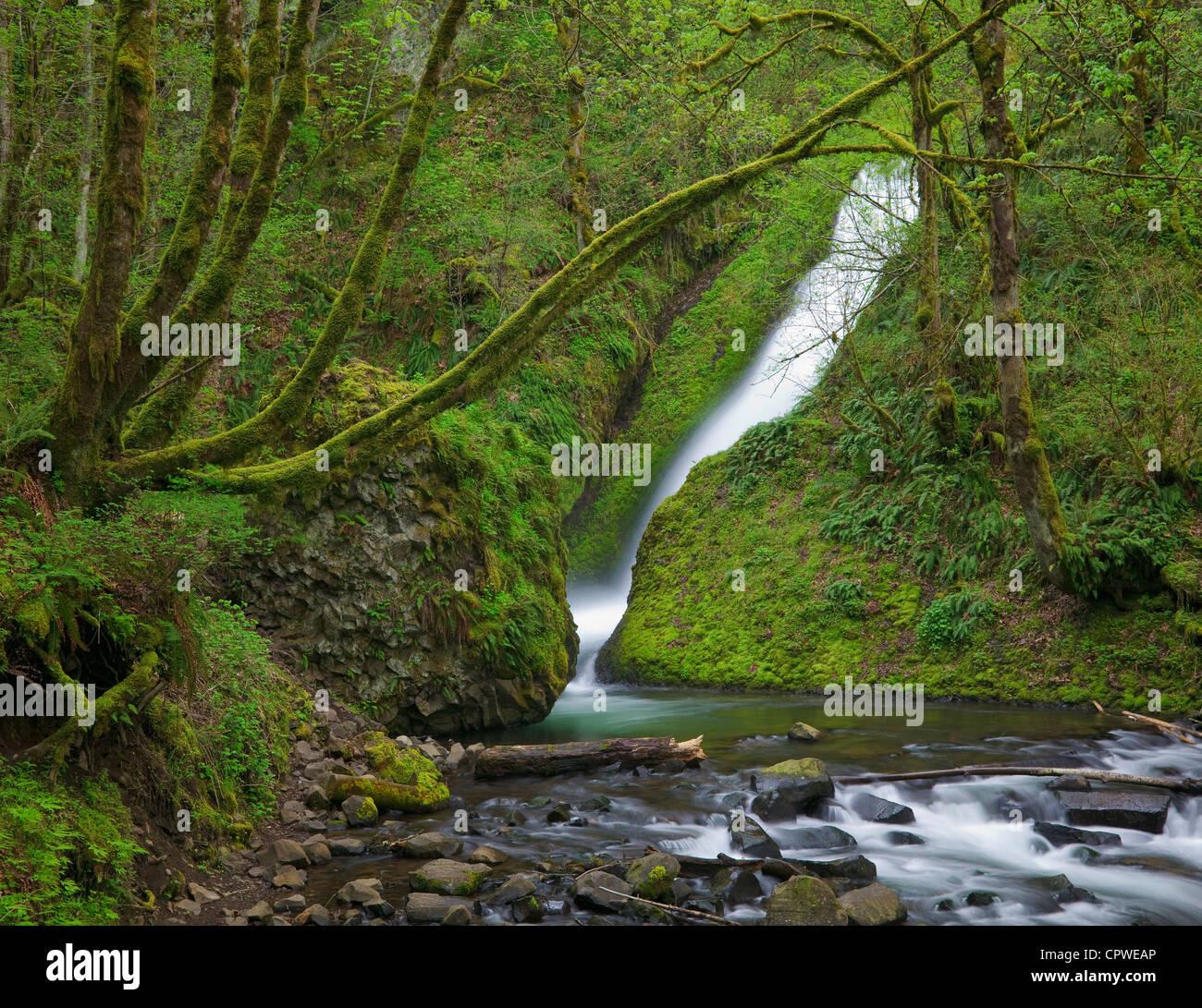 Monte Hood National Forest, O: la primavera flujo de Bridal Veil Falls en un cañón cubierto de musgo Imagen De Stock