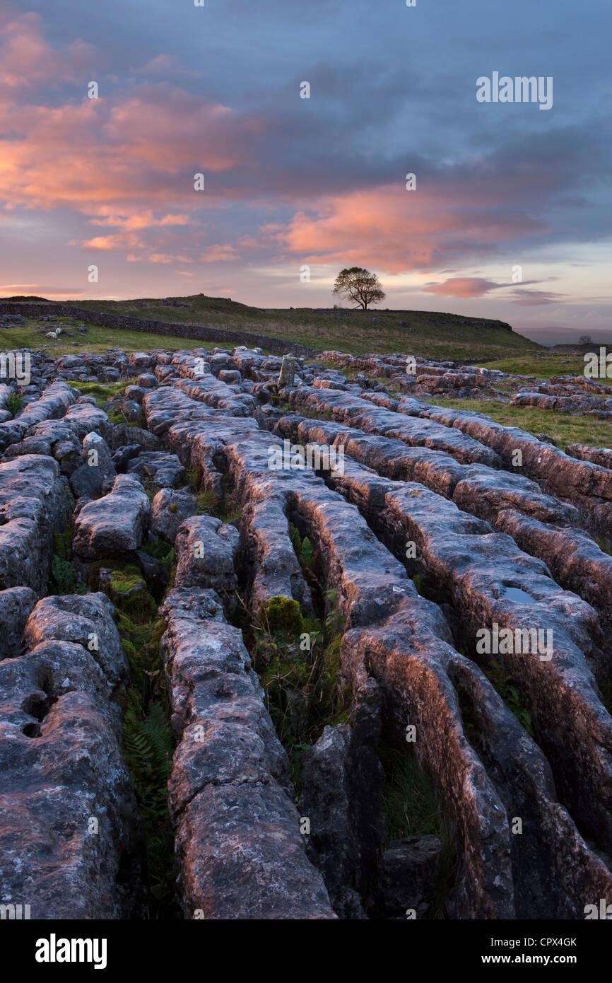 Un pavimento de piedra caliza en Malham Moro al amanecer, Yorkshire Dales, Inglaterra, Reino Unido. Imagen De Stock