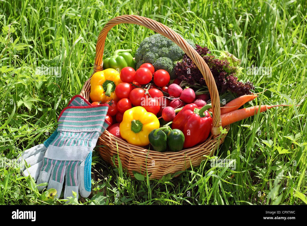 Canasta llena de verduras orgánicas con el guante en la hierba verde. Imagen De Stock