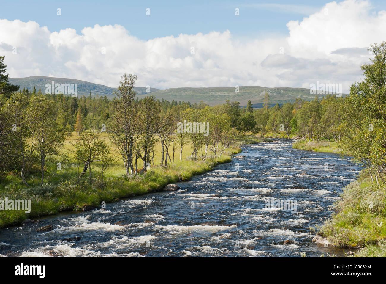 Desierto, con rápidos, río Groevlan Langfjaellet Reserva Natural cerca Groevelsjoen, provincia de Dalarna, Imagen De Stock