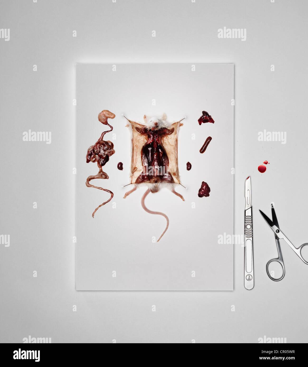 Dissecting Imágenes De Stock & Dissecting Fotos De Stock - Alamy