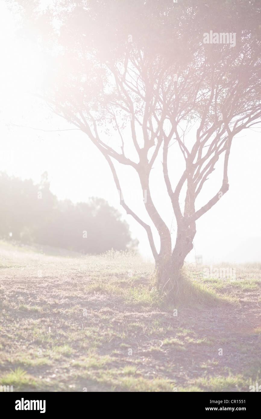 Árbol que crece en el campo Imagen De Stock