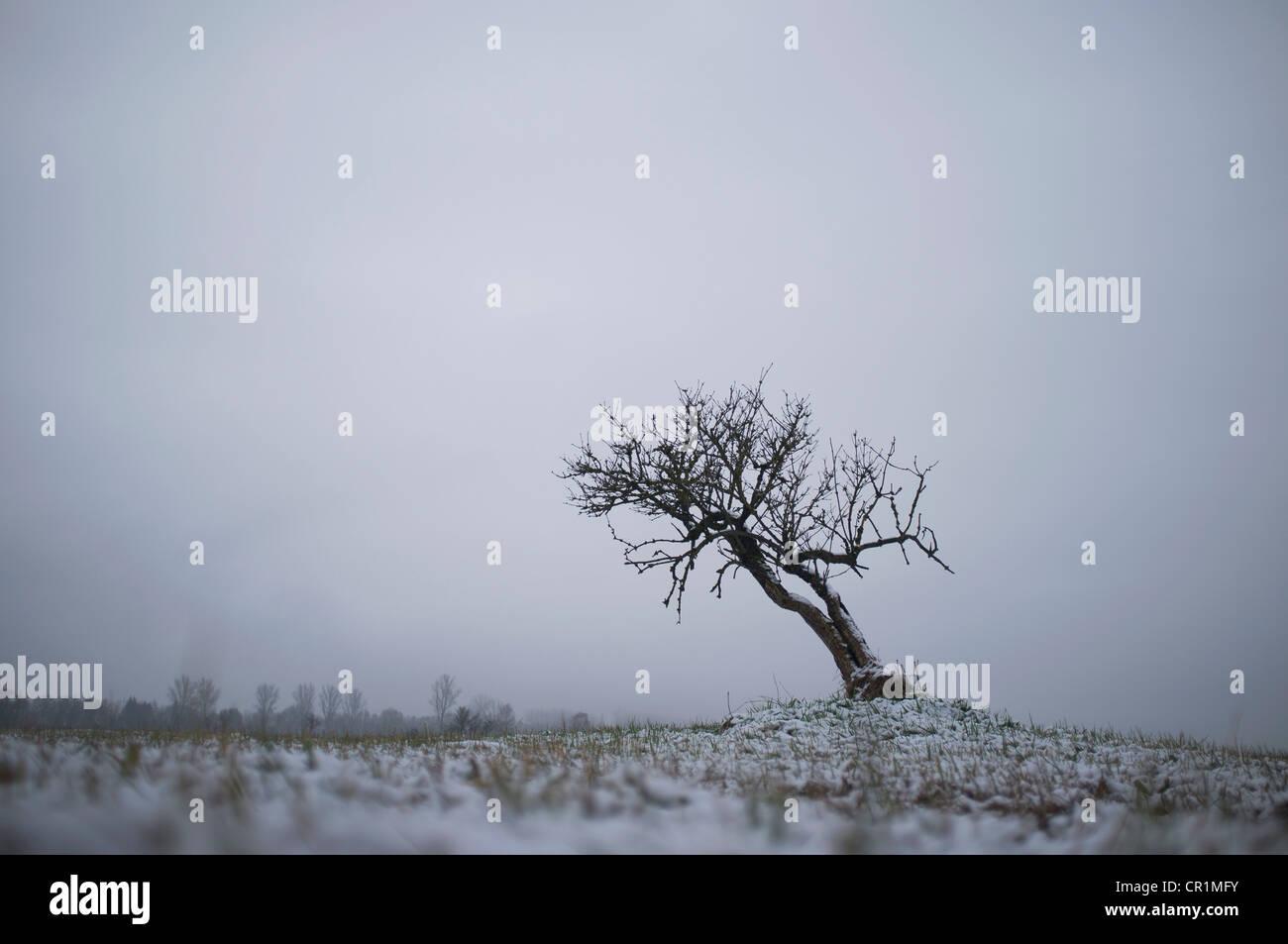 Bare árbol creciendo en paisaje nevado Imagen De Stock