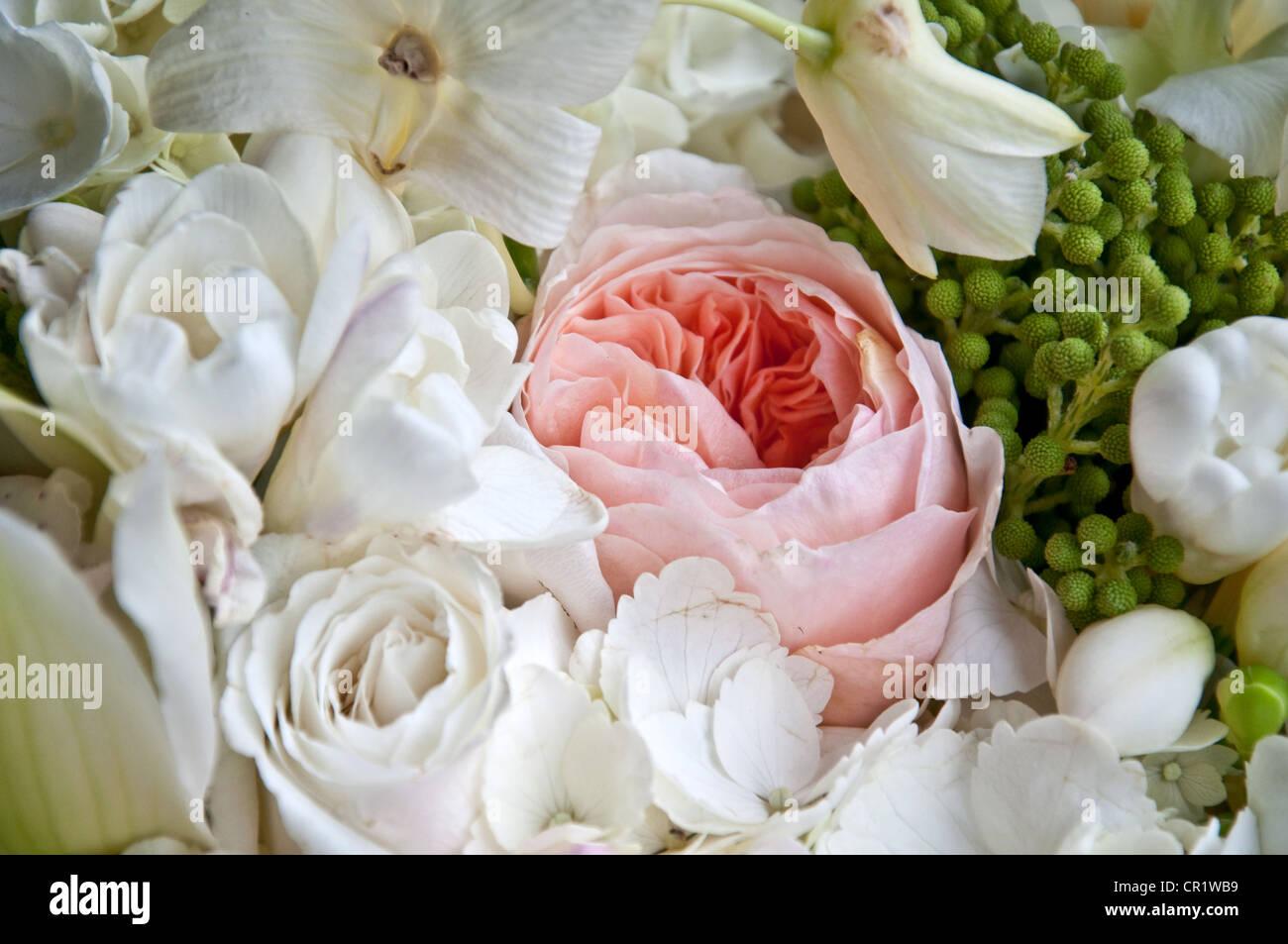 Esta Es Una Reliquia De La Rosa Rosa Inglés Entre Un Ramo De
