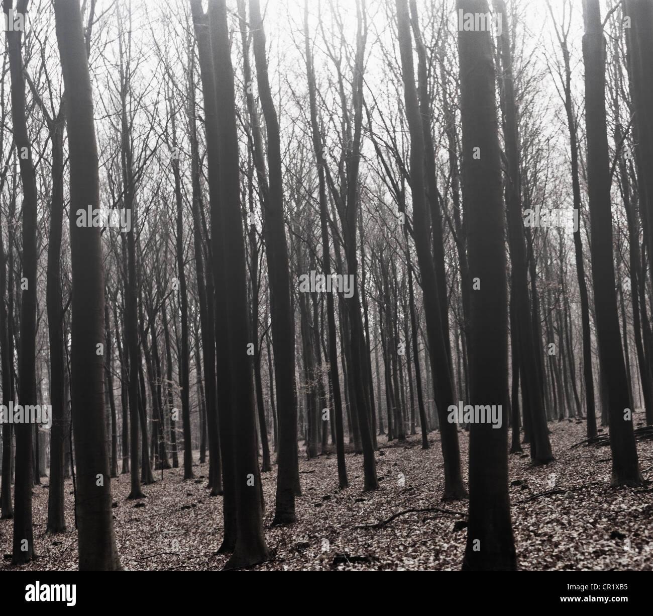 Desnudos de árboles que crecen en el bosque Imagen De Stock