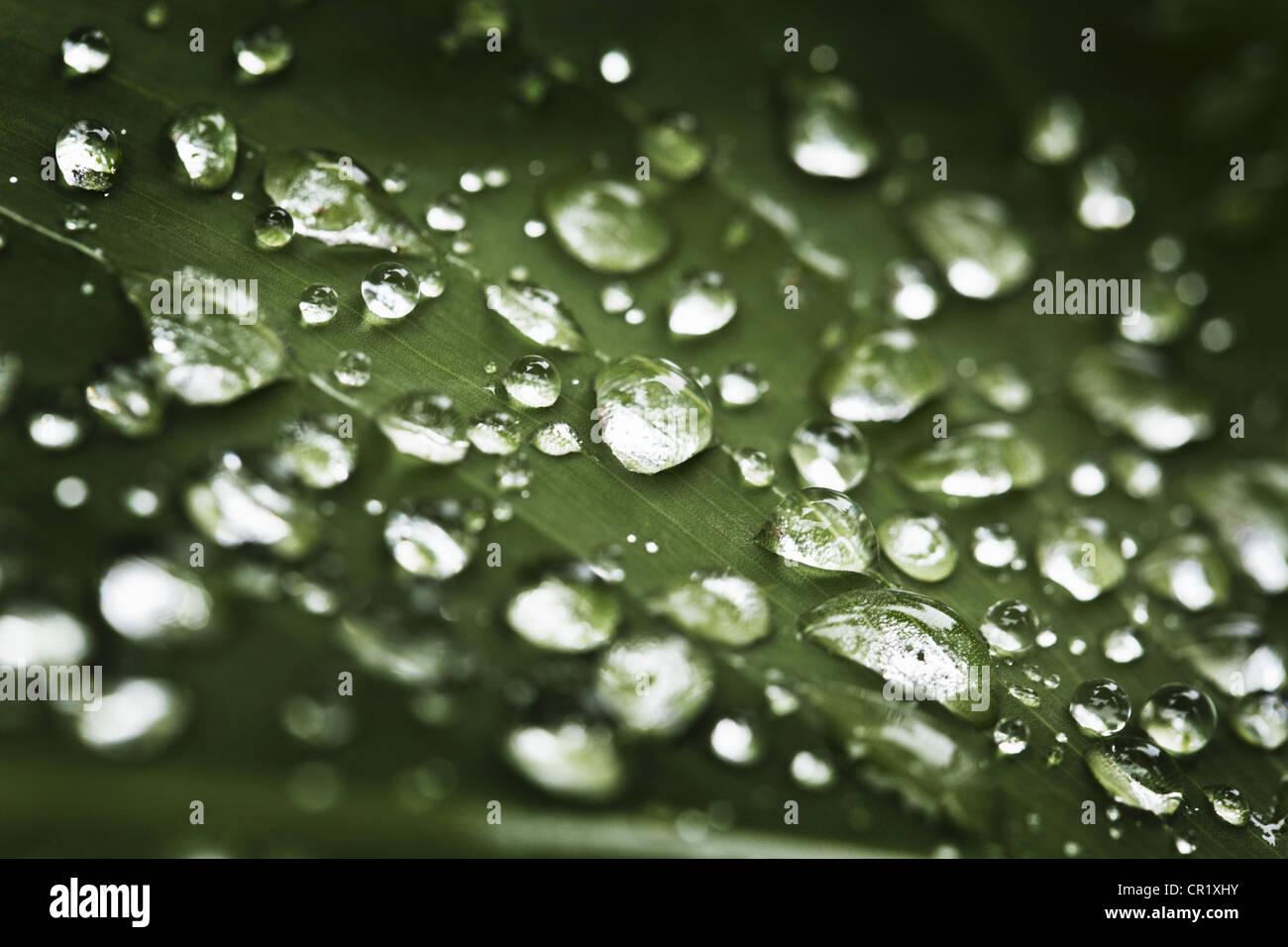 Cerca de las gotas de agua en la hoja Imagen De Stock