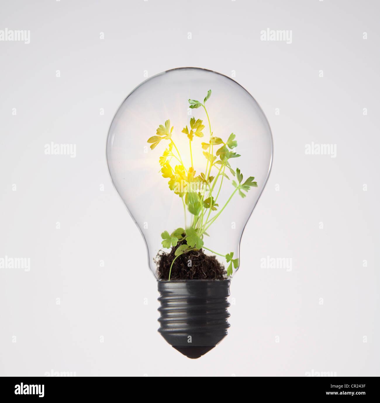 Las plantas que crecen en la bombilla Imagen De Stock