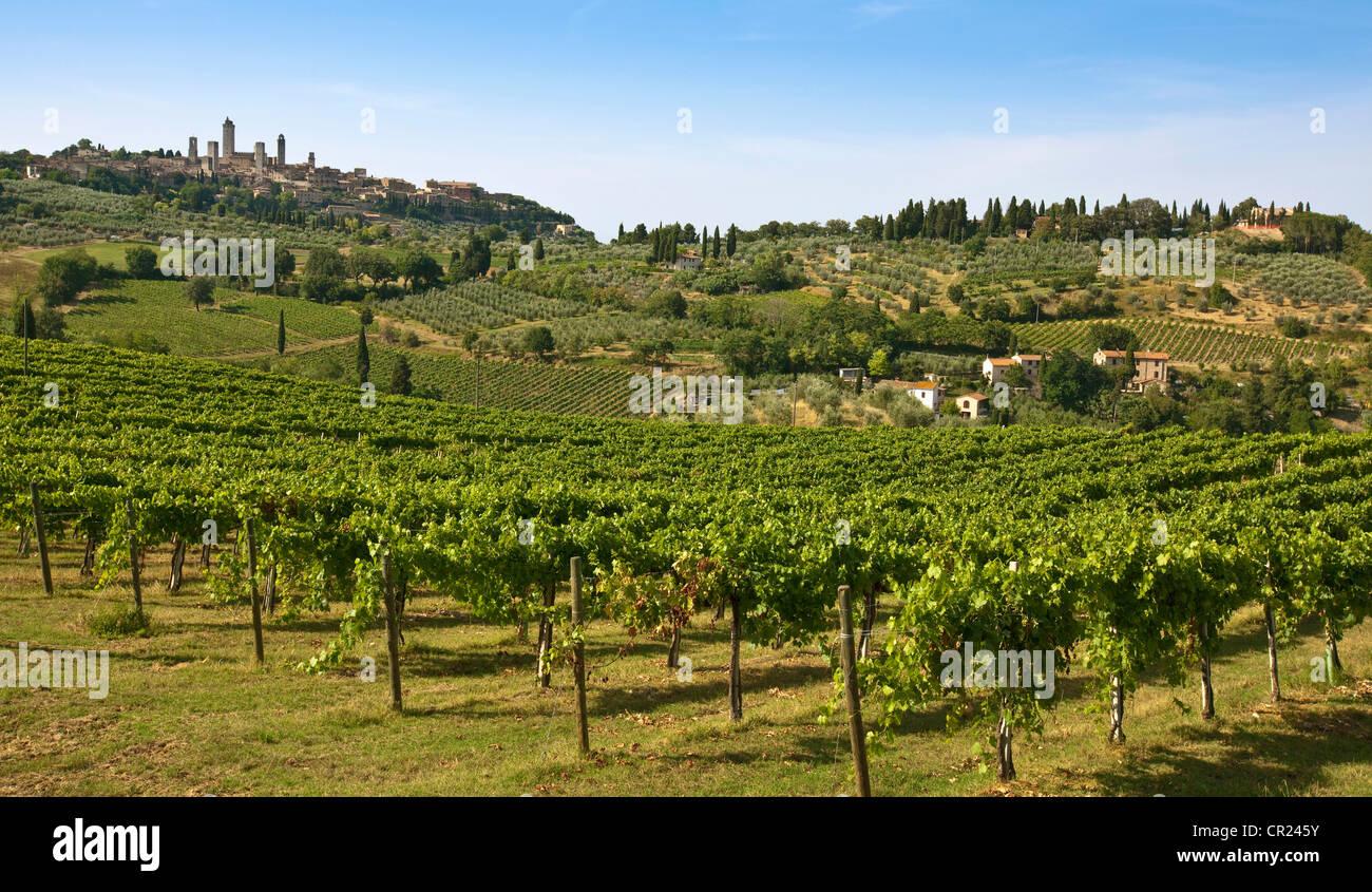 Filas de uvas crecen en viña Imagen De Stock