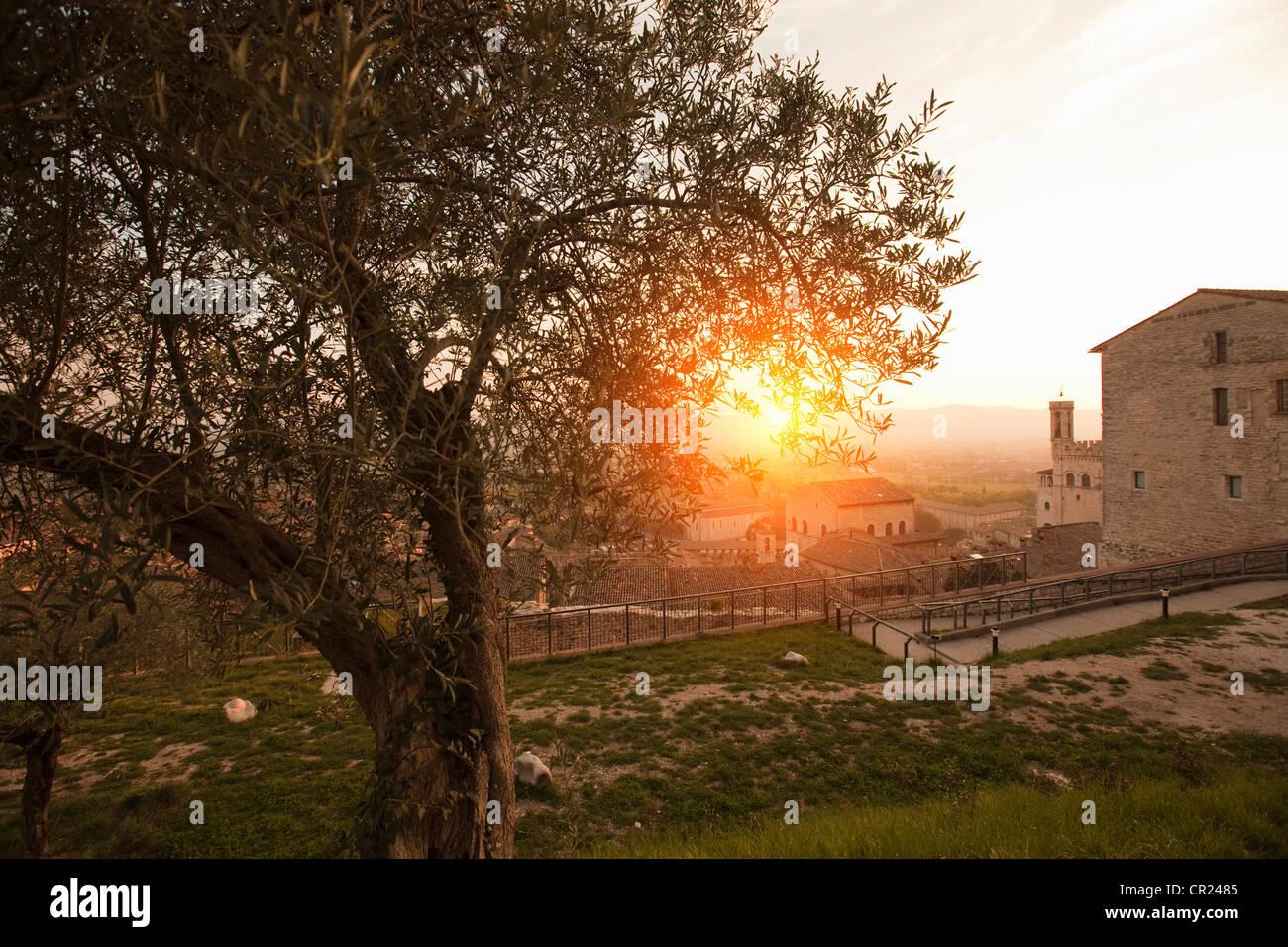 Árbol que crece en el parque de la ciudad Imagen De Stock