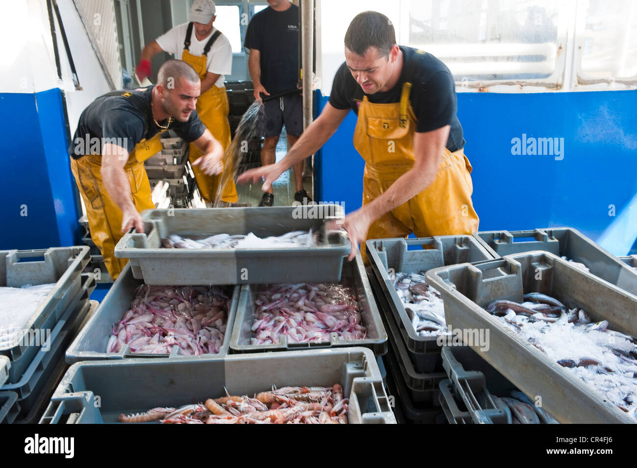 Francia, Herault, Sete, Vieux Port (Puerto Antiguo), la selección y el desembarque de los peces de un arrastrero del mercado de pescado Foto de stock