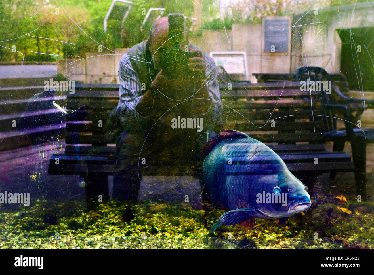 El fotógrafo se refleja en el cristal de un acuario Foto de stock