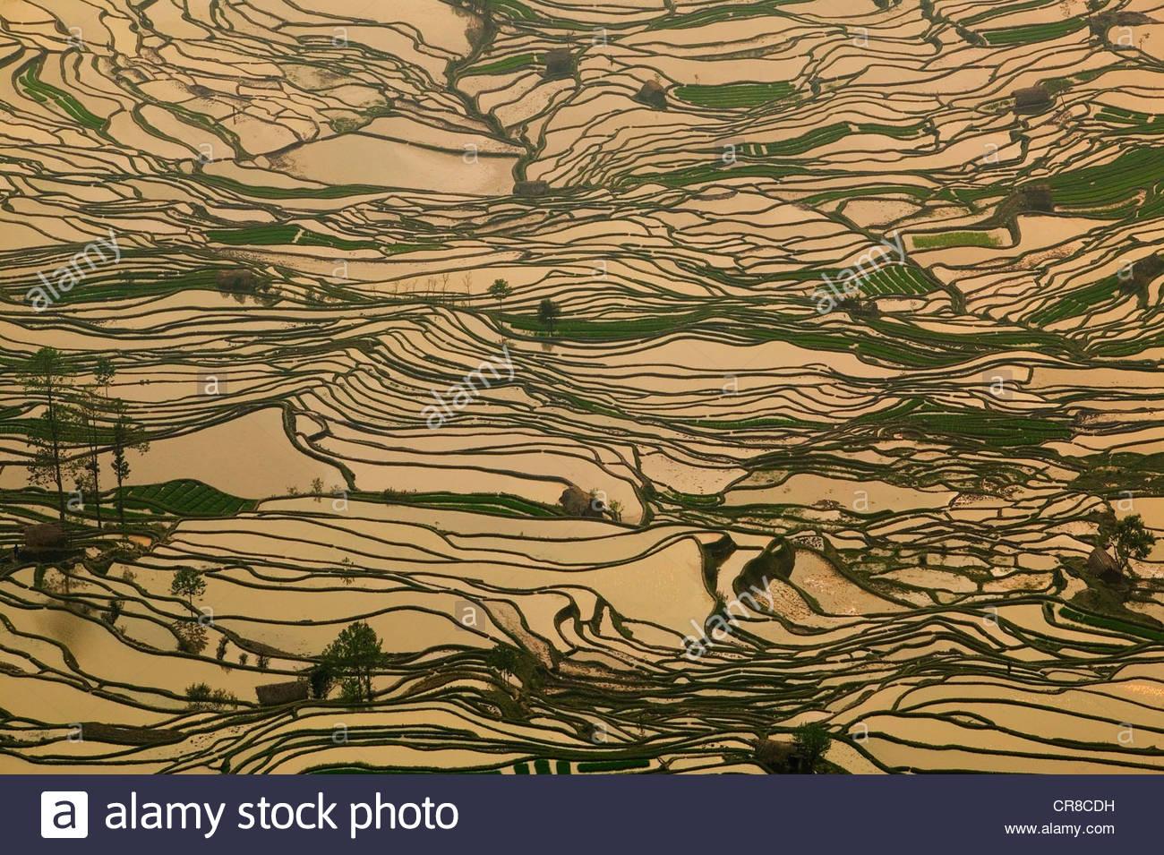 Arrozales en terrazas, en la provincia de Yunnan, China Imagen De Stock