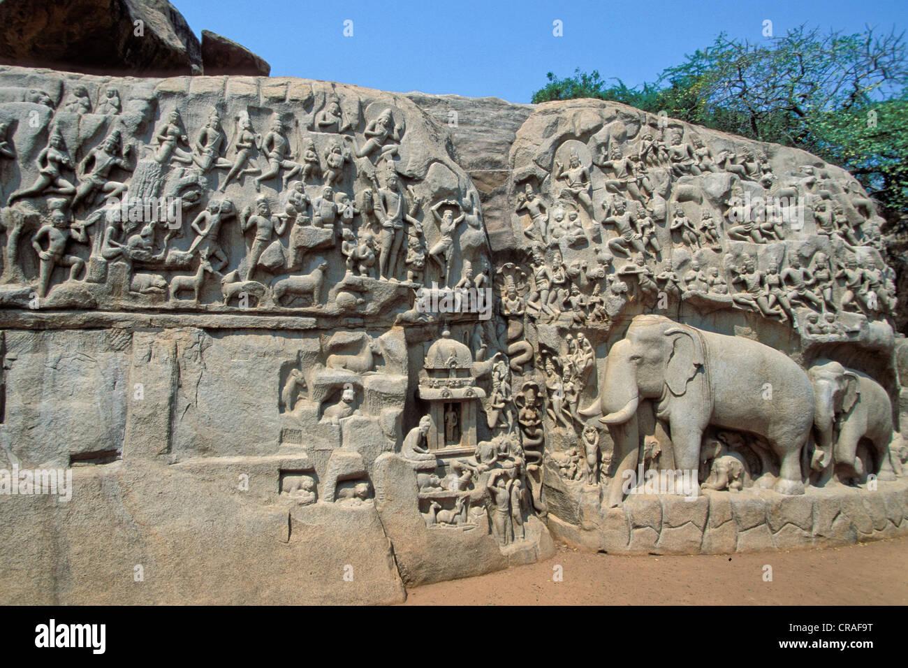 Bajorrelieve del descenso del Ganges o Arjuna la penitencia, Mahabalipuram o Mamallapuram, Tamil Nadu, India del Imagen De Stock