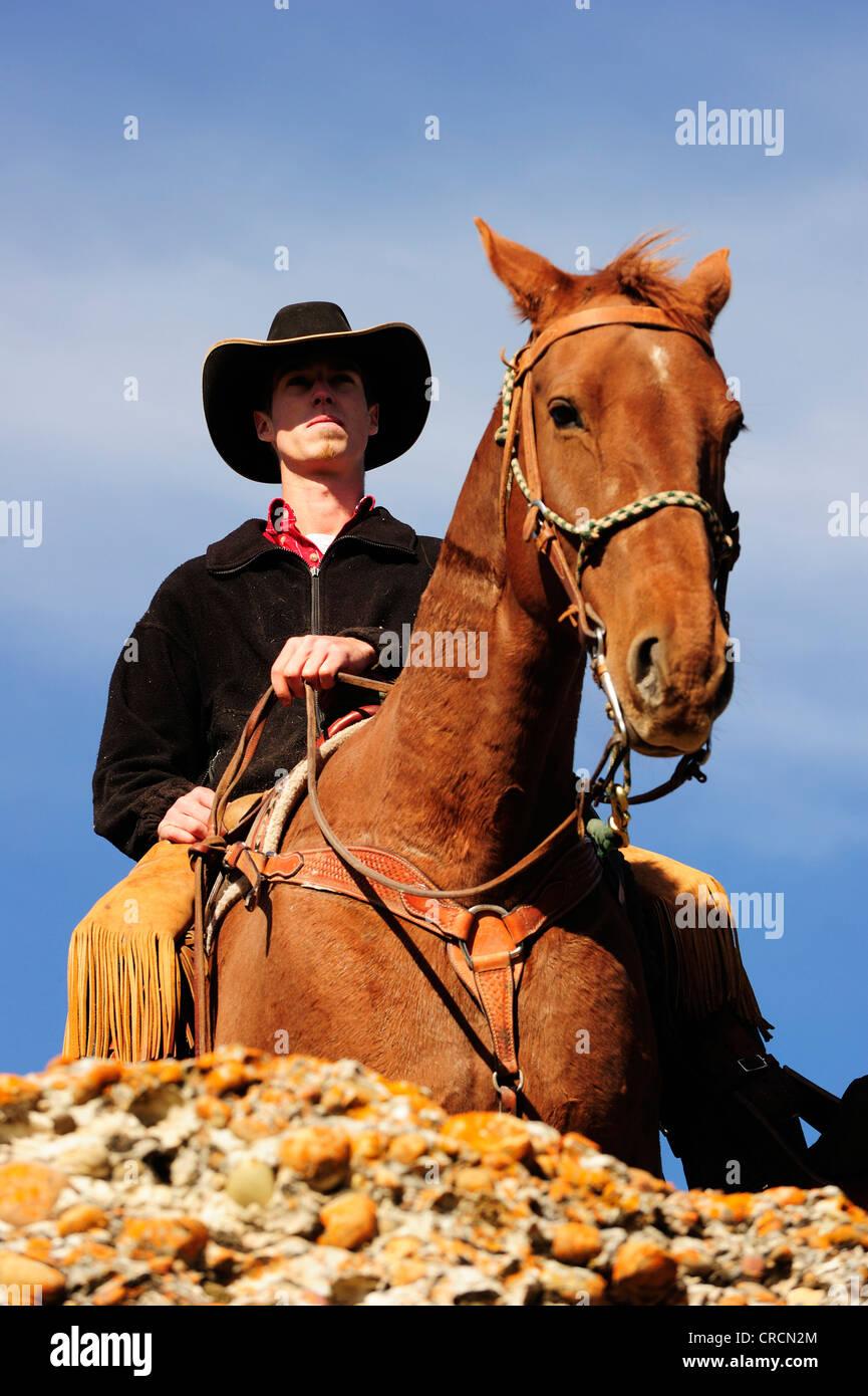 Vaquero en un caballo mirando a la distancia, Saskatchewan, Canadá, Norteamérica Foto de stock