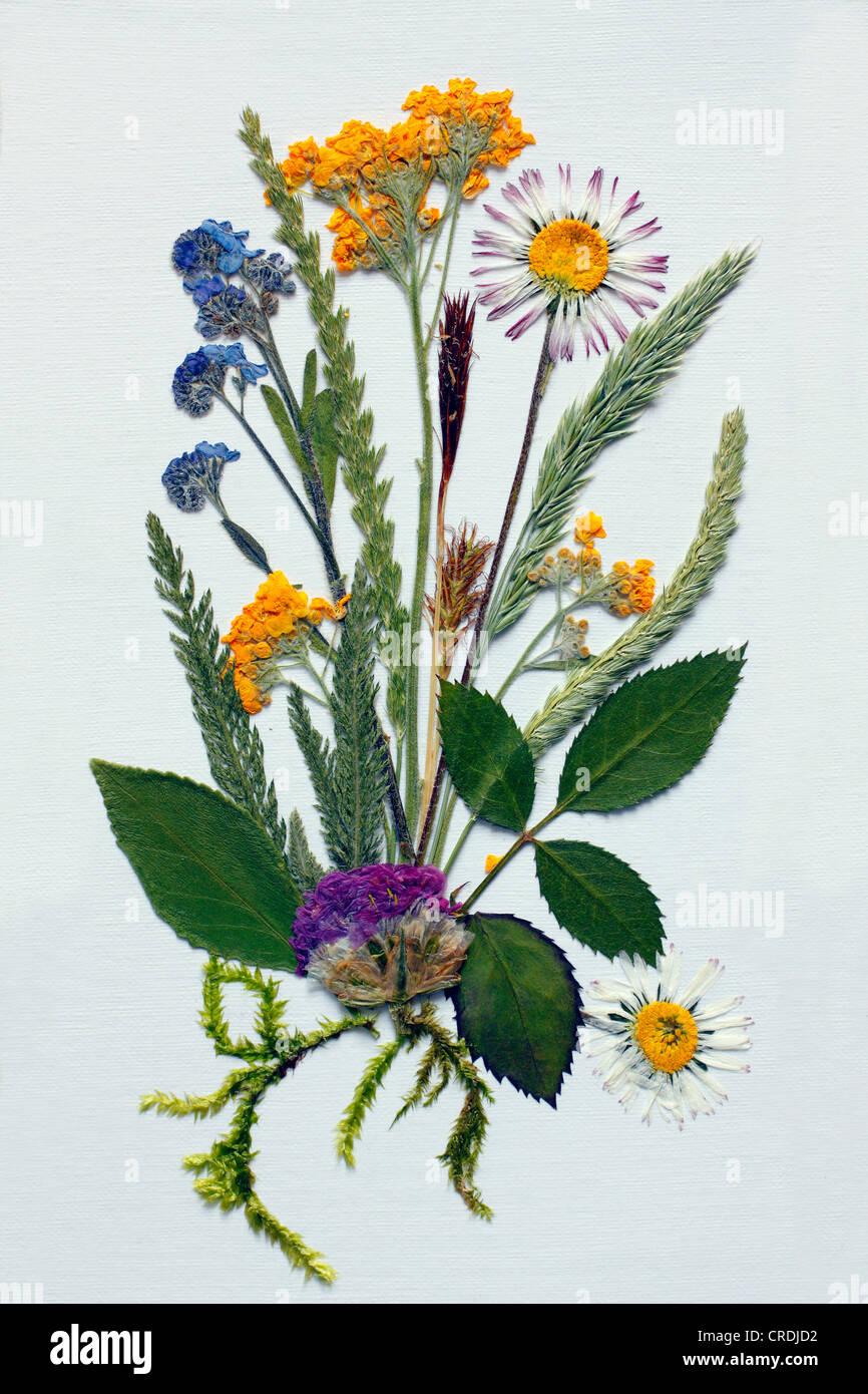 Bodegón con flores y hierbas pulsada Imagen De Stock