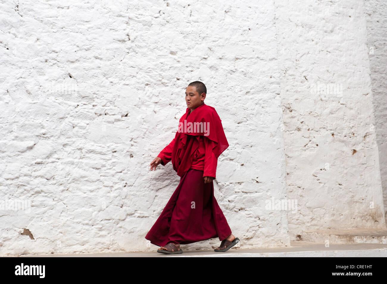 El budismo tibetano, monje en una túnica roja caminando delante de una pared blanca, Tango Goemba monasterio, cerca de Thimphu, la Himalaya Foto de stock