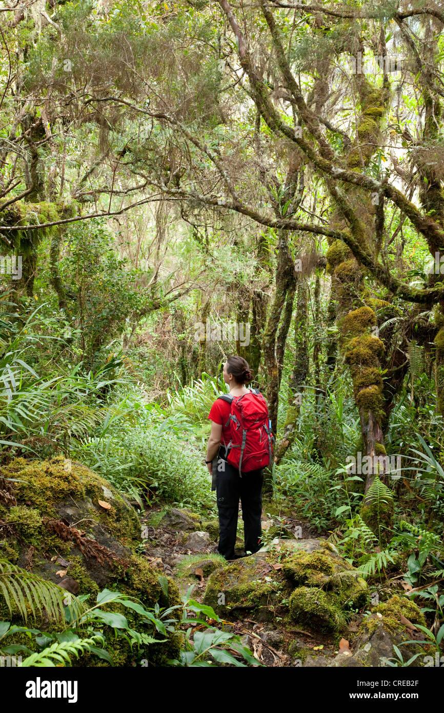Caminante en la selva, el circo de Salazie caldera en Hell-Bourg, isla de La Reunion, el Océano Índico Imagen De Stock