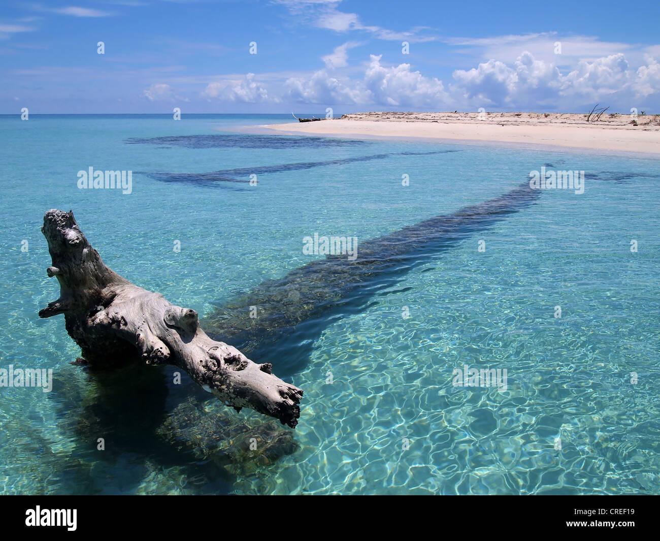 Driftwood en agua limpia, cerca de una playa de arena Imagen De Stock