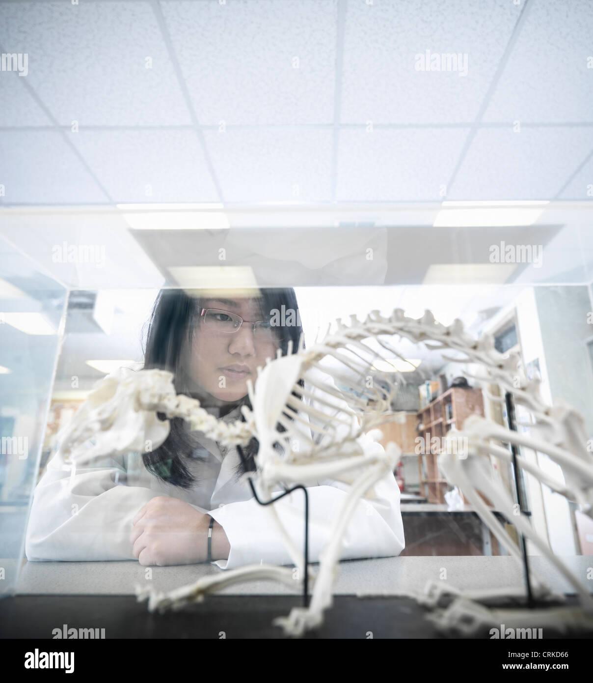 Examinar el modelo de estudiante de Biología Imagen De Stock