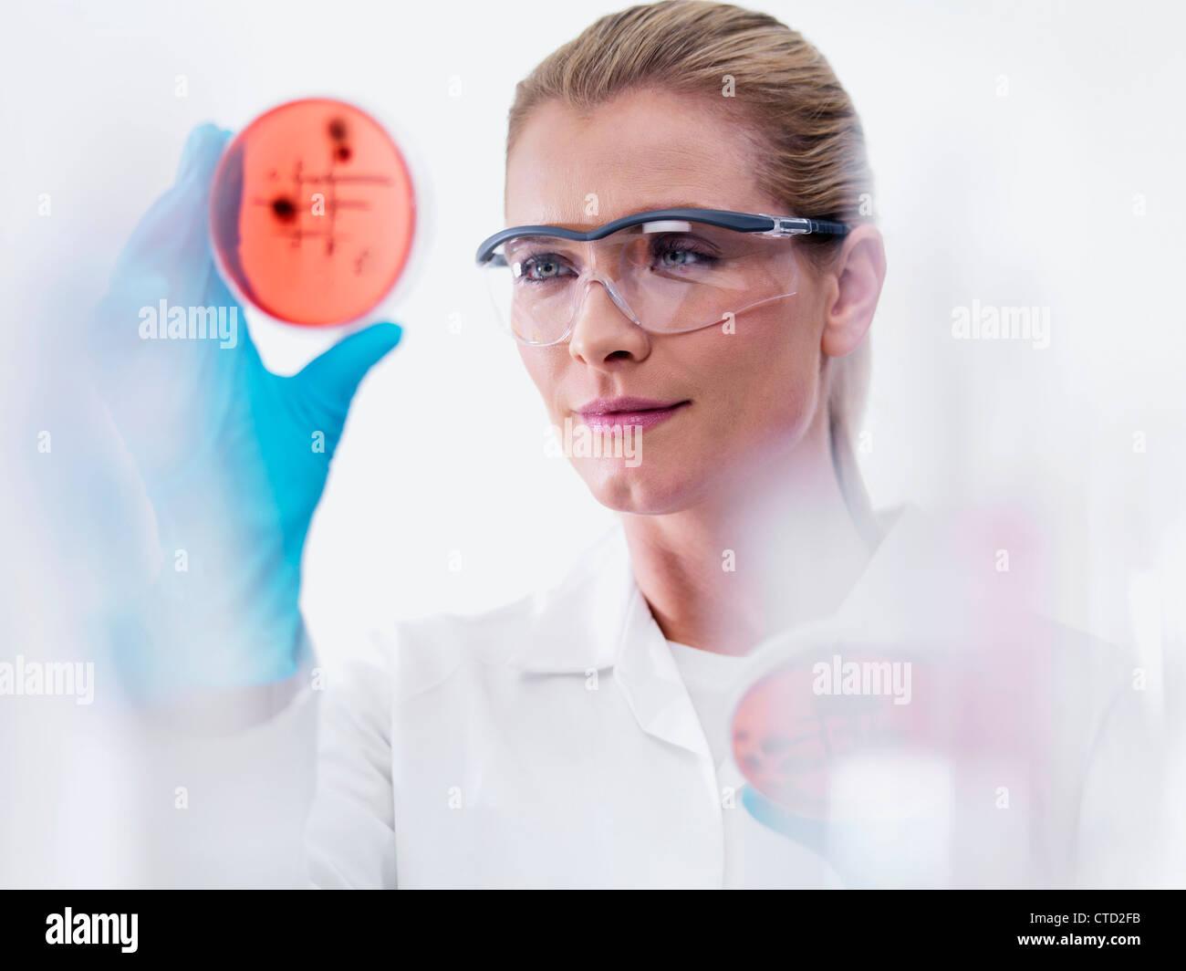 El microbiólogo examinar las culturas Imagen De Stock