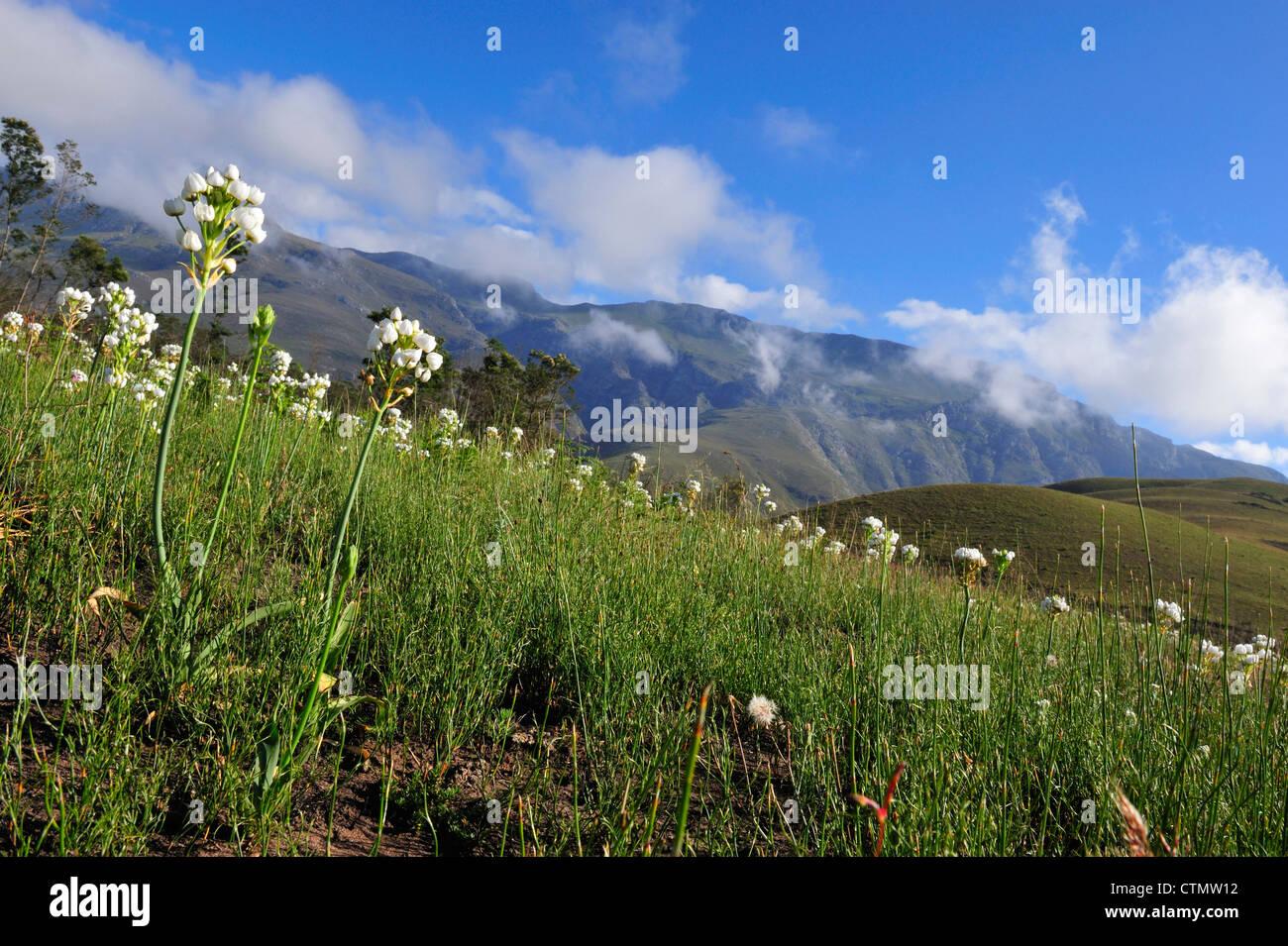 En la Chinchirri Overberg, Western Cape, Sudáfrica Foto de stock