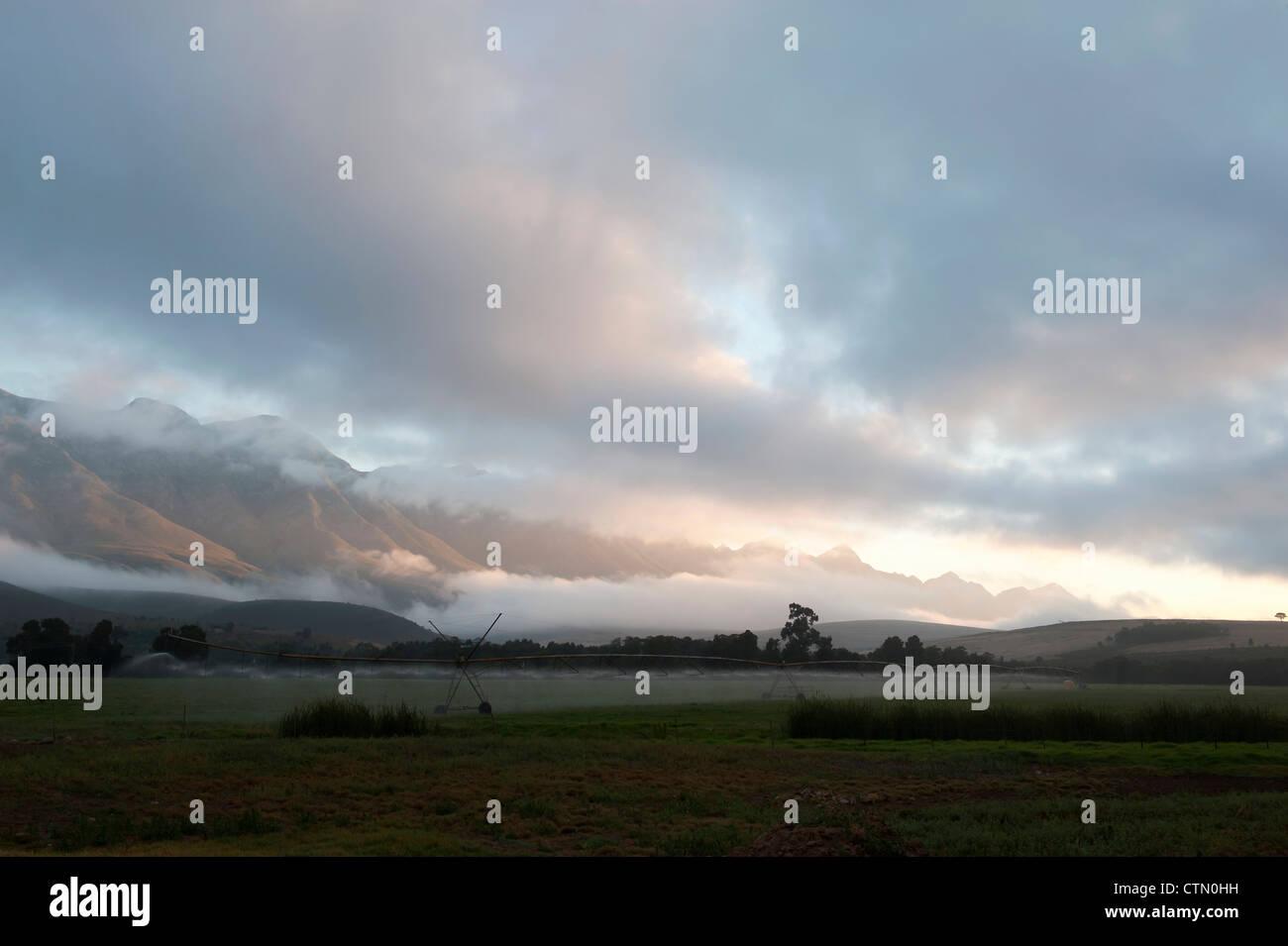 Temprano en la mañana el riego de Lucerna, Overberg cerca Grayton Riviersonderend diario, Montañas, Western Cape, Sudáfrica Foto de stock