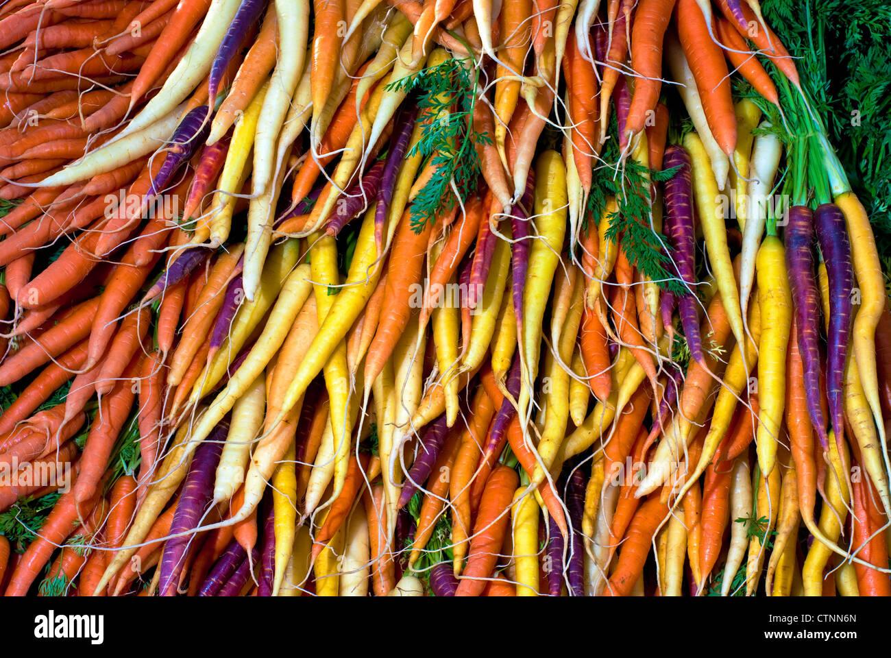 Naranja Violeta Blanco Y Amarillo Zanahorias Todo Listo Para Comer Fotografia De Stock Alamy Ho ho ho🎅🐰 la naviada ya llego a zanahoria refugios, y trajo con ella muchas ofertas para tu conejito. https www alamy es foto naranja violeta blanco y amarillo zanahorias todo listo para comer 49650125 html