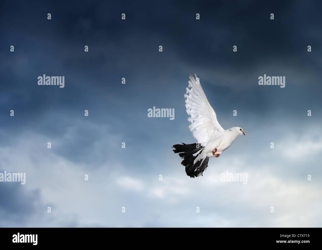 Paloma Volando En El Cielo Tormentoso Fotografía En Movimiento Foto
