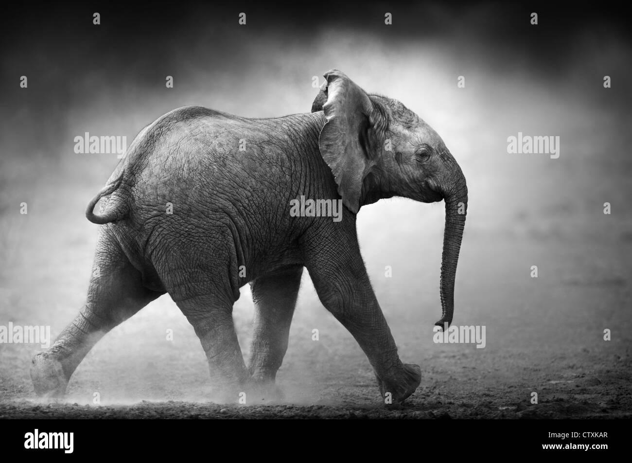 Bebé Elefante corriendo en polvo (procesamiento artístico) Parque Nacional Etosha - Namibia Foto de stock