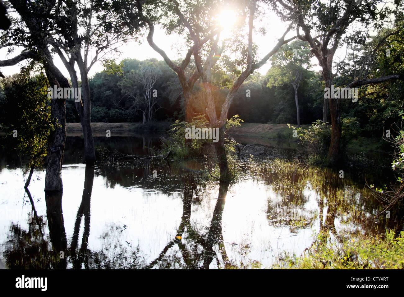 Los árboles se reflejan en el lago todavía Foto de stock